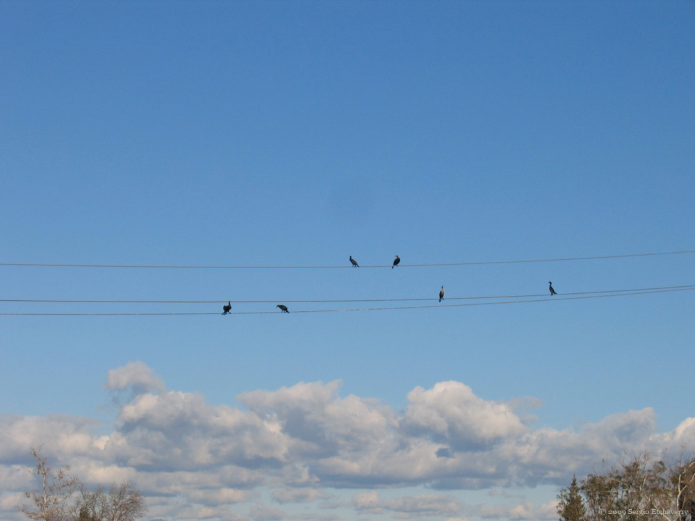picture of birds on a wire